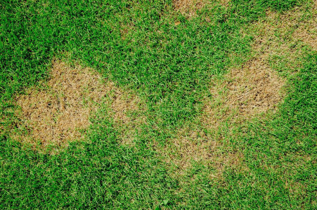 How to Spot and Treat Common Fall Turf Diseases Tree