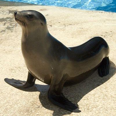 Pin De Ayde Custodio En Surprising Marine Animals Leon Marino Foca Vida Marina