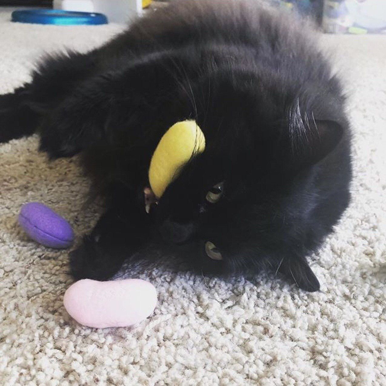 Easter Hunt Jelly Beans Organic Cat Toy Cats And Kittens Cute Animals Organic Catnip