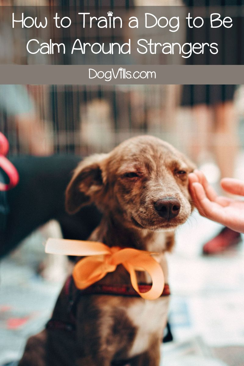 5 Tips To Train A Dog To Be Calm Around Strangers Dog Training