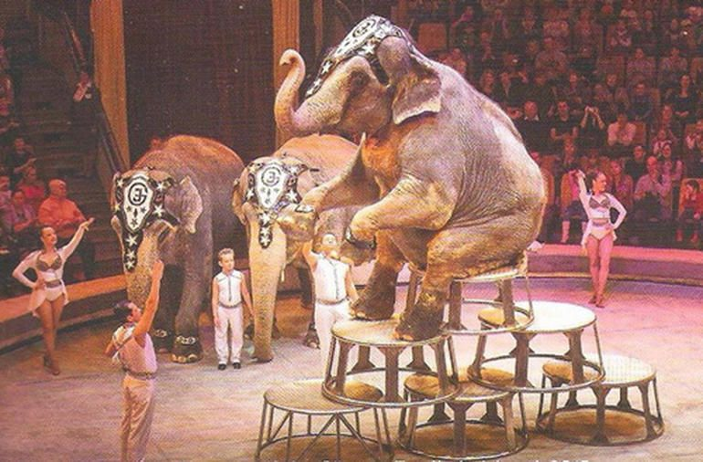 The Enterprise Conference Circus Is In Town Circus Elephant Circus Elephant