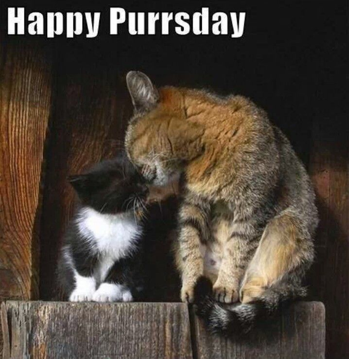 Image result for happy purrsday images