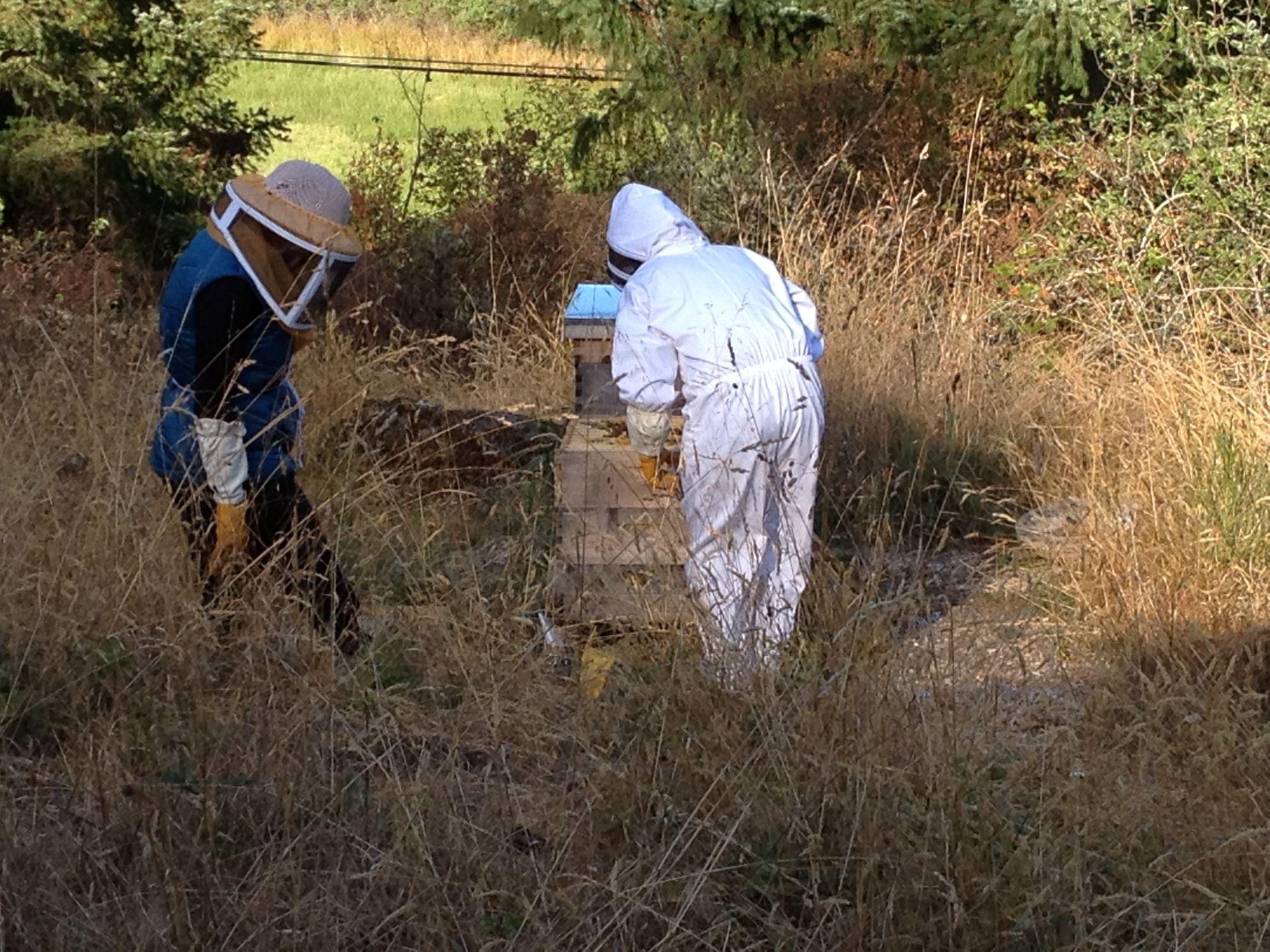 Checking hives