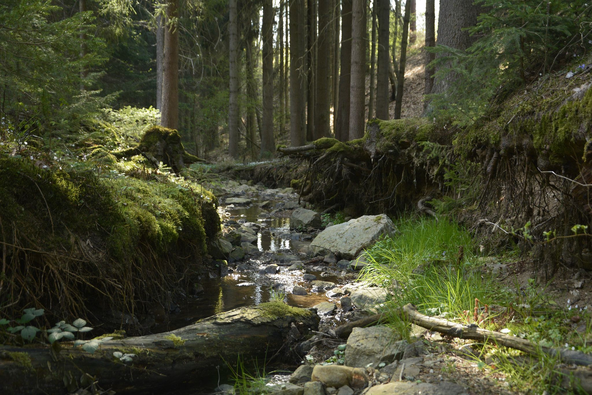 https://flic.kr/p/nkJYSz   (PA0445) Western European broadleaf forests   (PA0445) Western European broadleaf forests