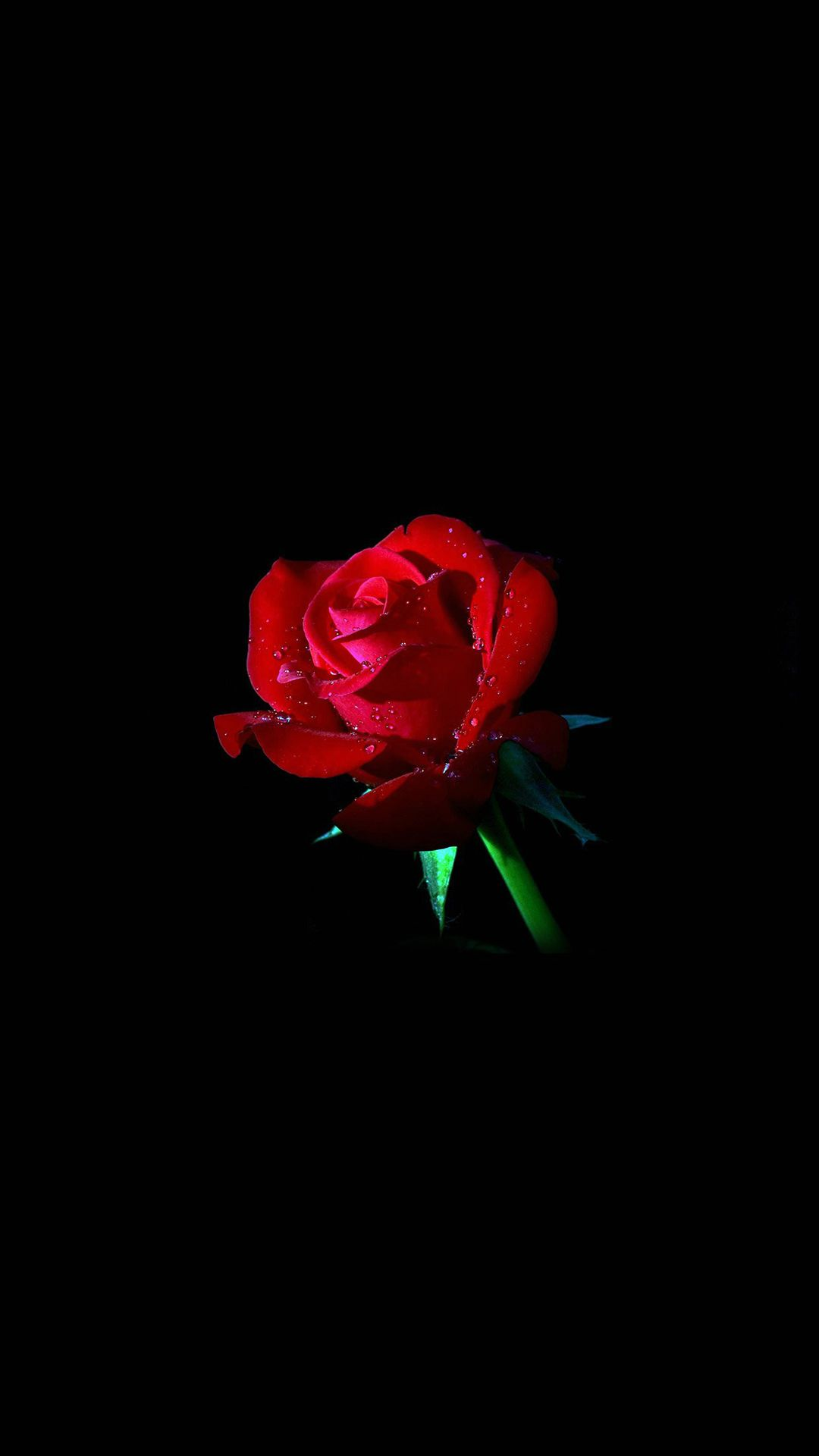 Elegant Dew Rose In Dark Iphone 8 Wallpapers Dark Wallpaper Rose Wallpaper Flower Wallpaper