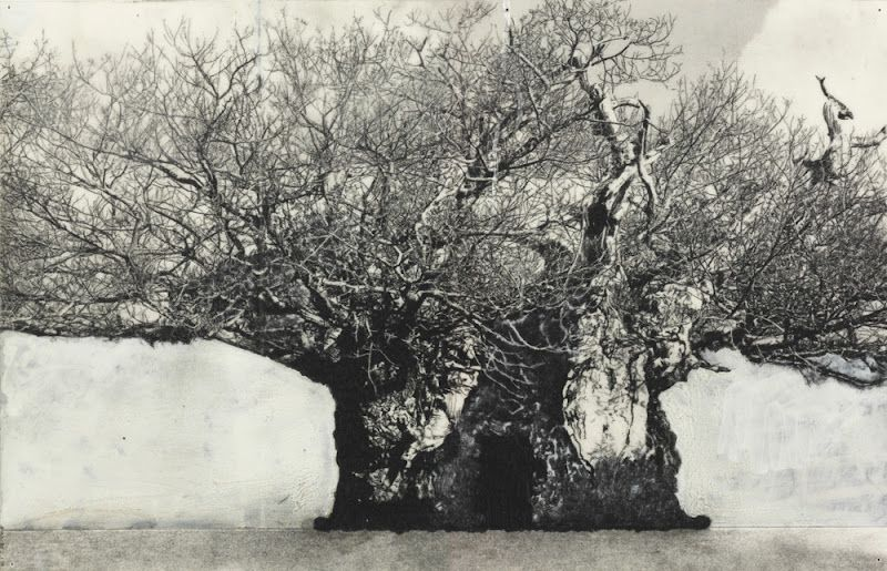 PATRICK VAN CAECKENBERGH, from the serie 'Drawings of Old Trees' summer 2010