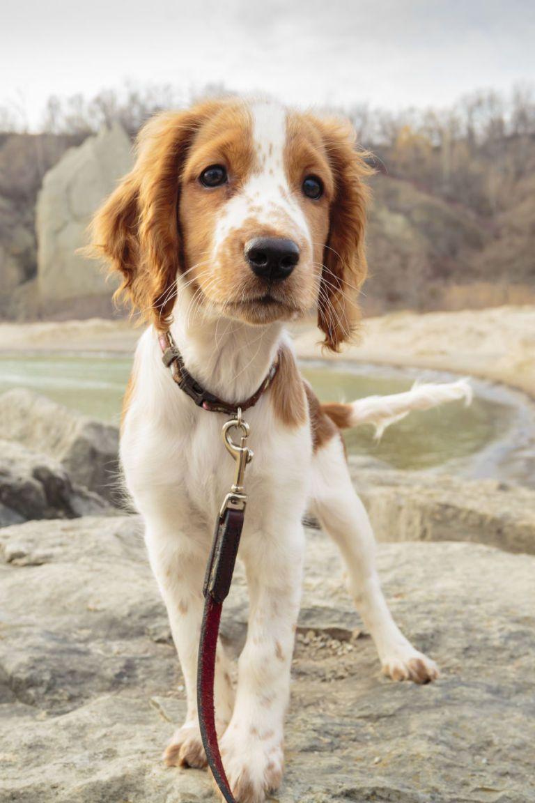 40 Best MediumSized Dogs Best medium sized dogs, Cute
