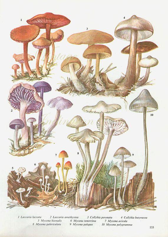 Vintage Antique Mushrooms Illustration Book Page Book Print Etsy In 2020 Mushroom Art Botanical Drawings Botanical Art
