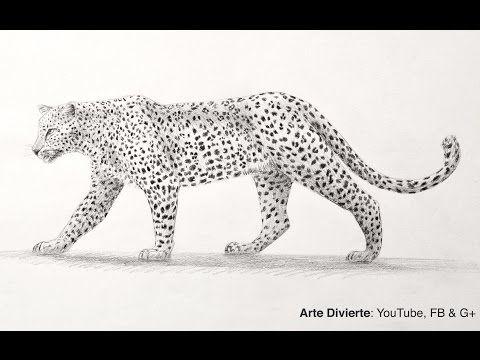 Cómo dibujar un leopardo de perfil a lápiz - YouTube | art lesson ...
