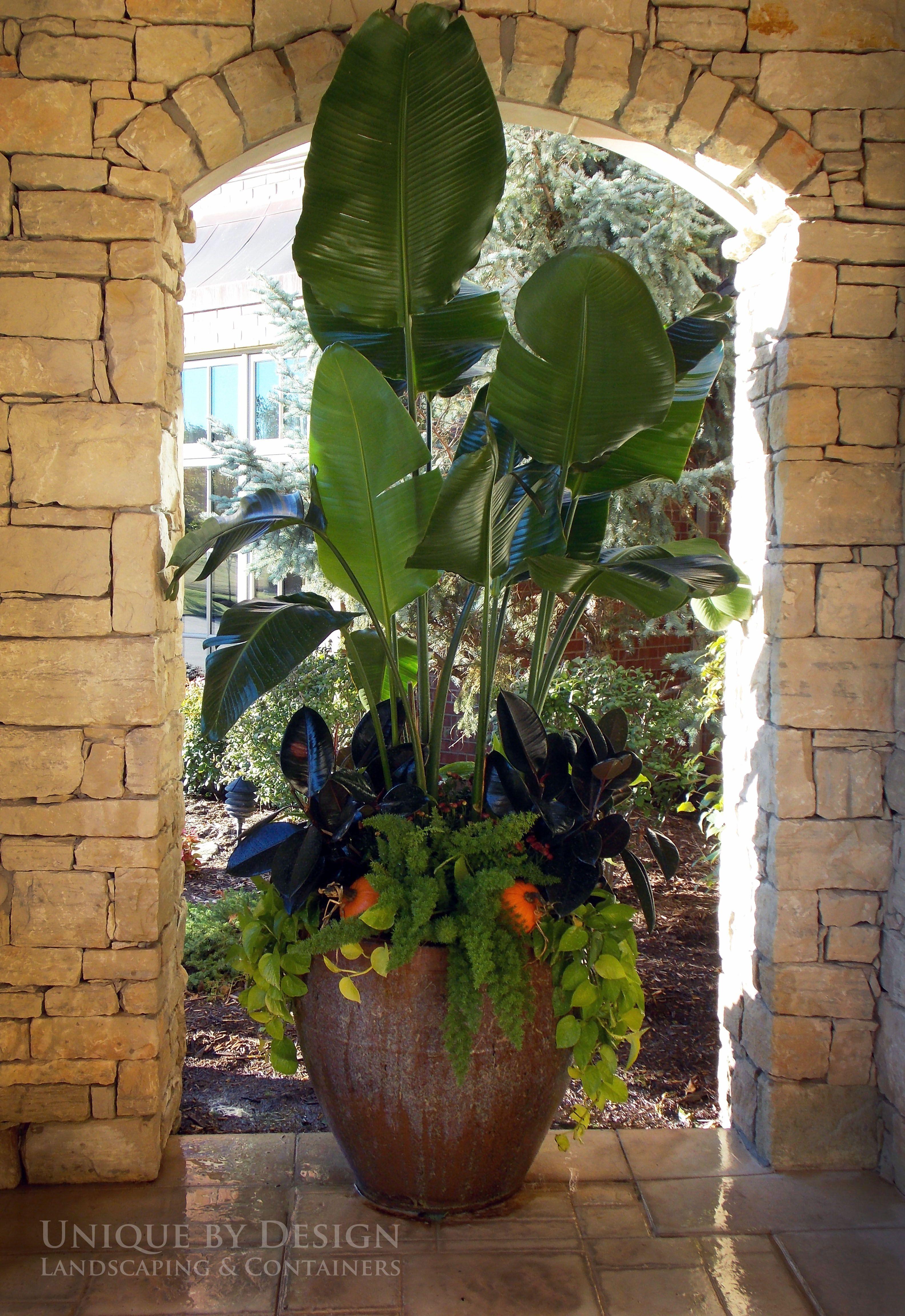 tropical planter   unique by design l helen weis