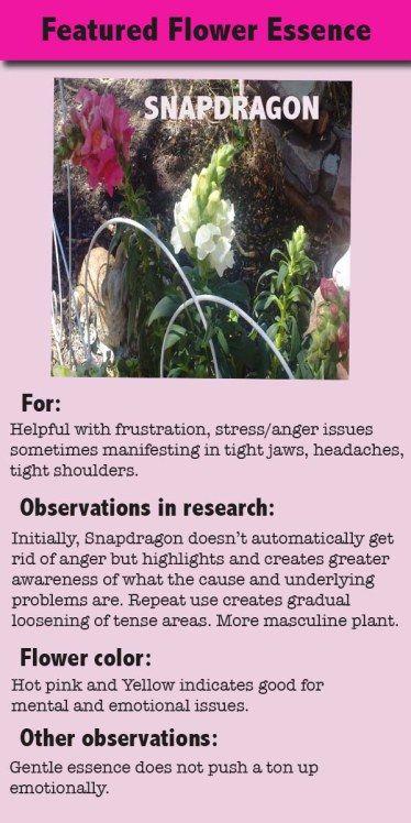 Featured Flower Essence Snapdragon Flower Essences Flower Essences Remedies Bach Flower Remedies