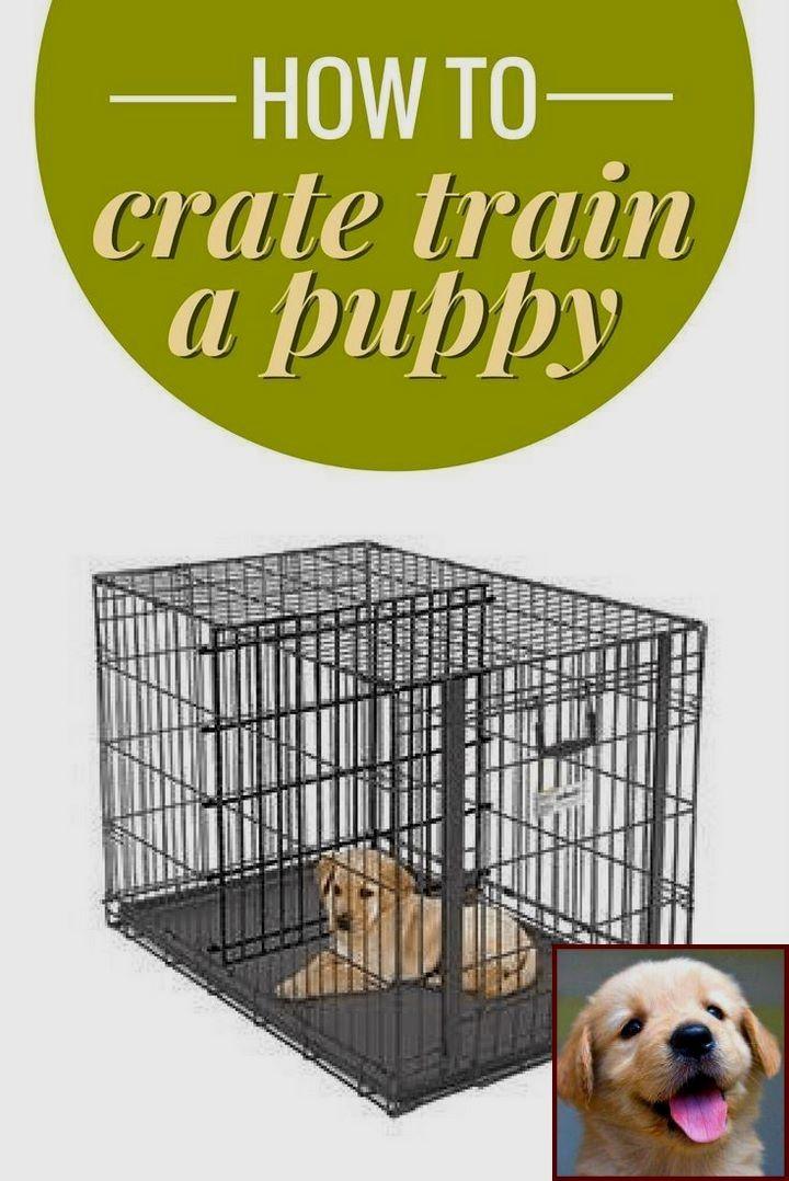 Pin On Dog Behavior Problems