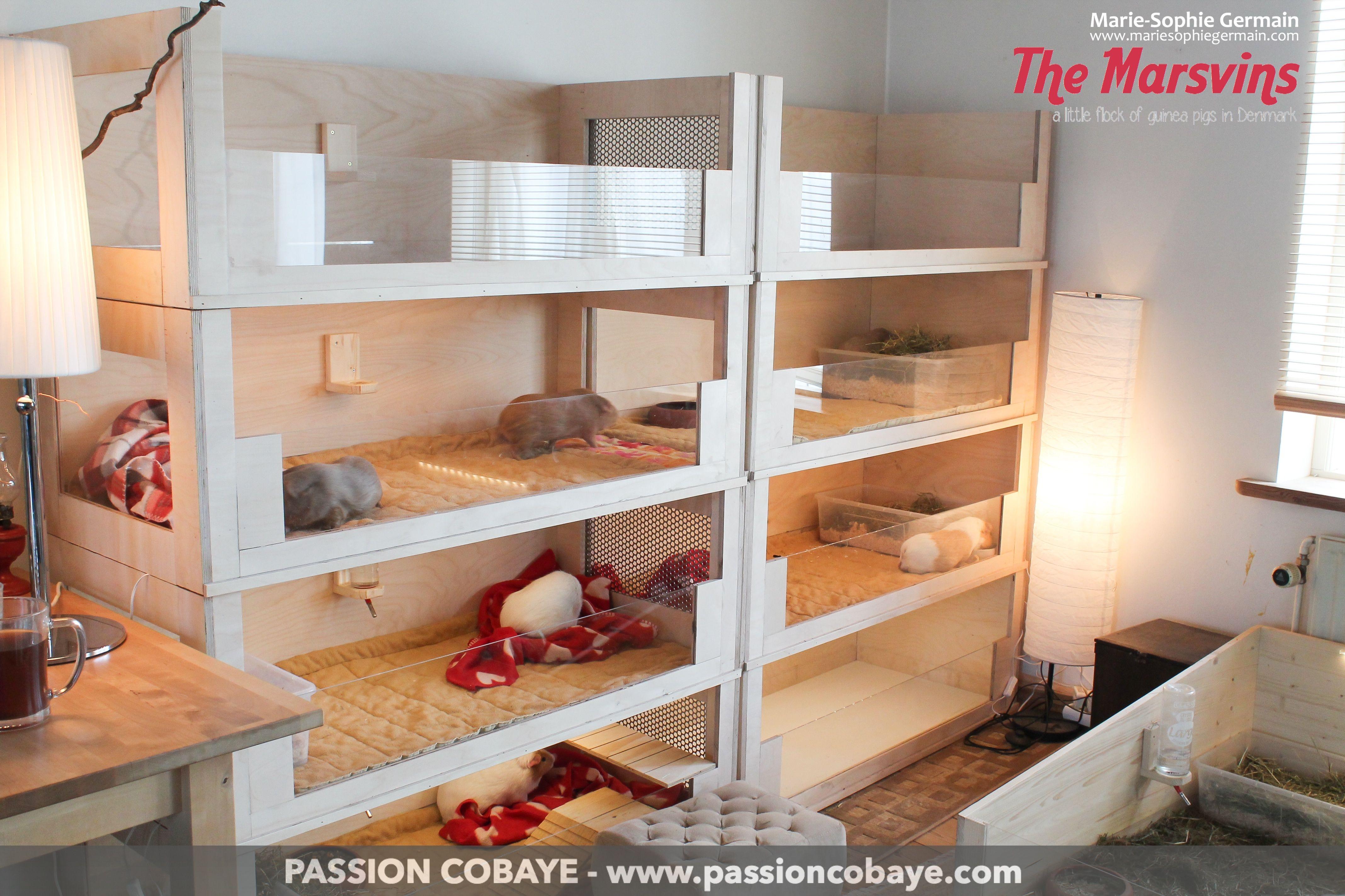 le meuble l tag re maisons cochon d 39 inde. Black Bedroom Furniture Sets. Home Design Ideas