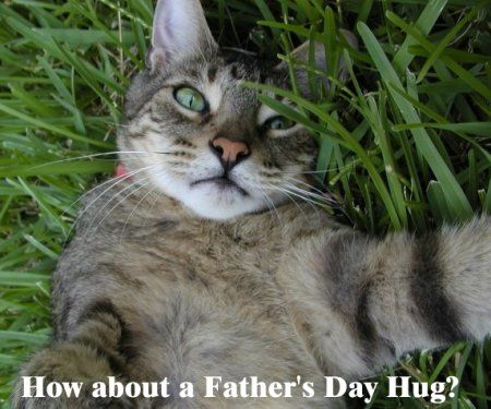 How about a fathers day hug happyfathersday fathersday cats cat how about a fathers day sciox Gallery