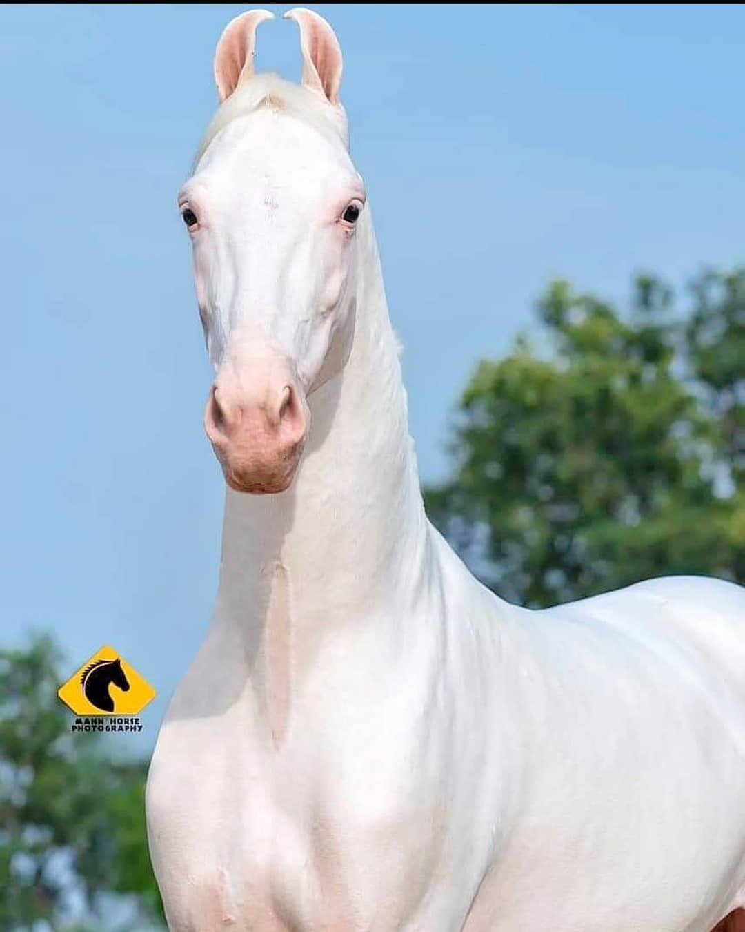 Blue Cross Equine Rescue