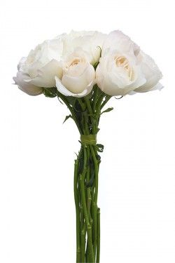 Classic Woman Garden Rose