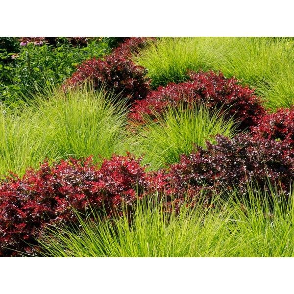 gardens - Garden Design Using Grasses