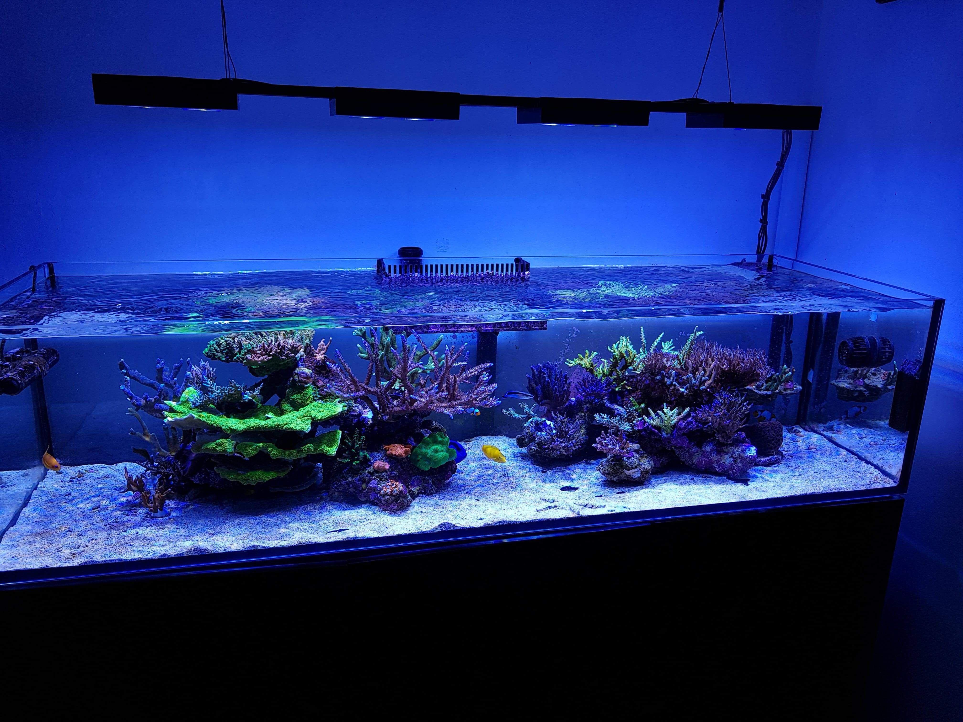 45b560b0eaddc3494e896123b025c809 Frais De Aquarium Recifal Complet Concept