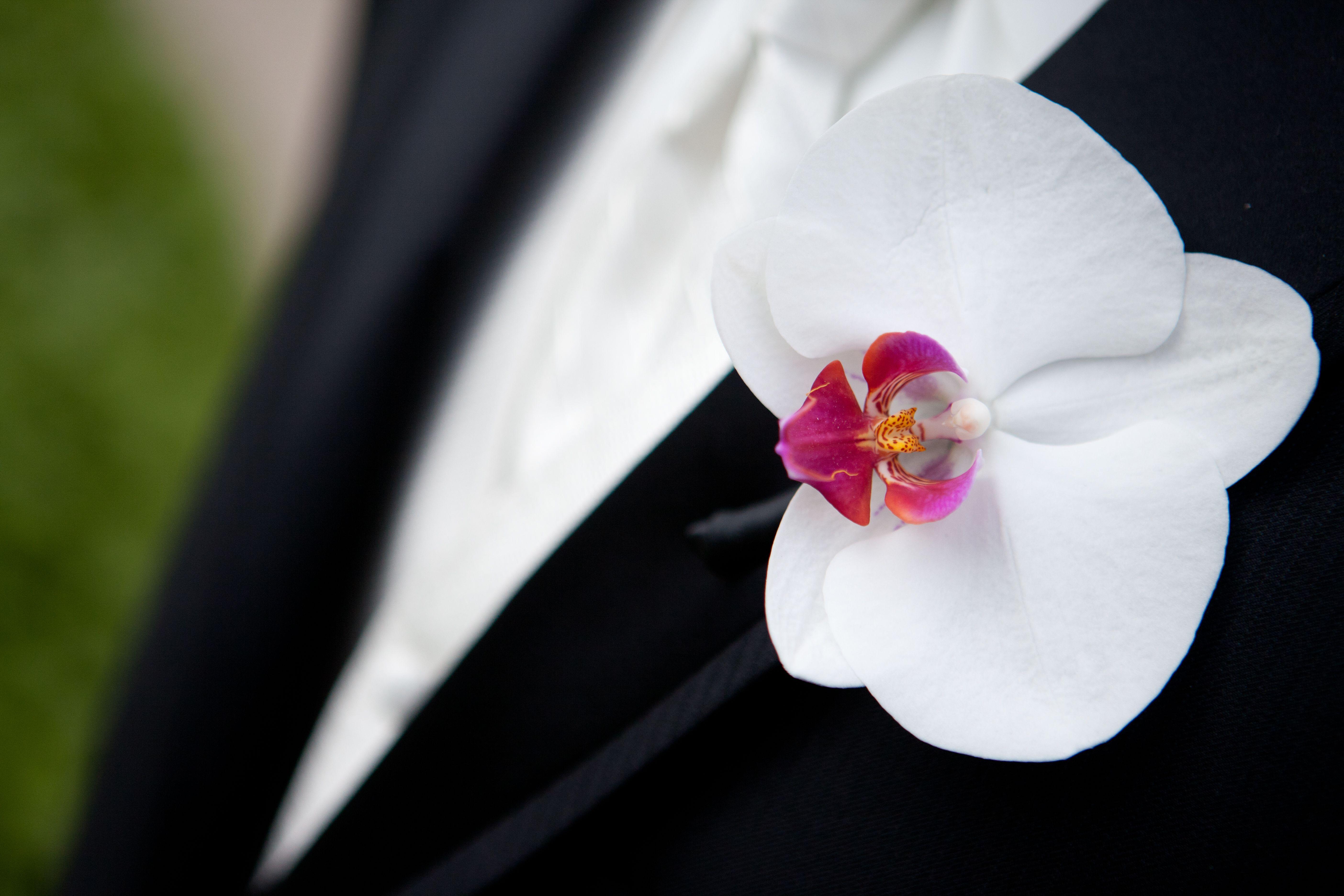 Private Mansion Rhode Island Orchids Abound Elissa