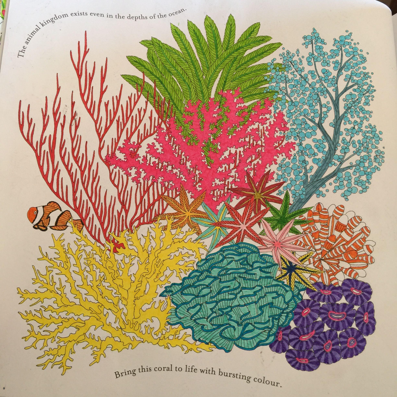 Colouring From My Animal Kingdom Book Milliemarotta Coral Ocean Underwater Animalkingdom Animalkingdomcolouringbook