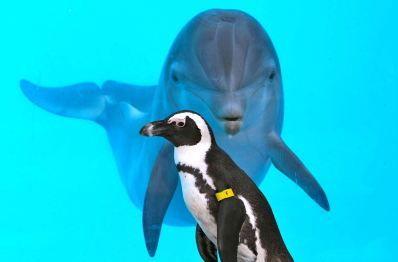 Pinguino strega delfini: foto dell' incredibile scena immortalata allo zoo