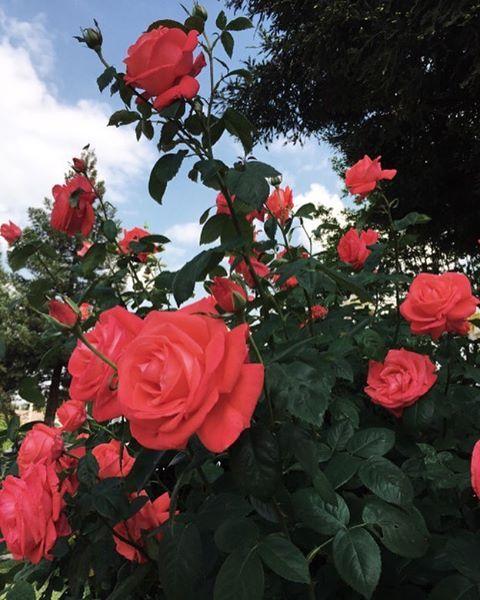 Pink Flowers Wallpaper: Pinterest @Blessed187 (com Imagens)