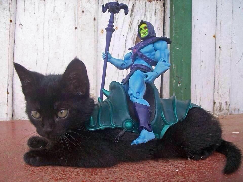 I hope this cat messes He-Man up. Real talk.