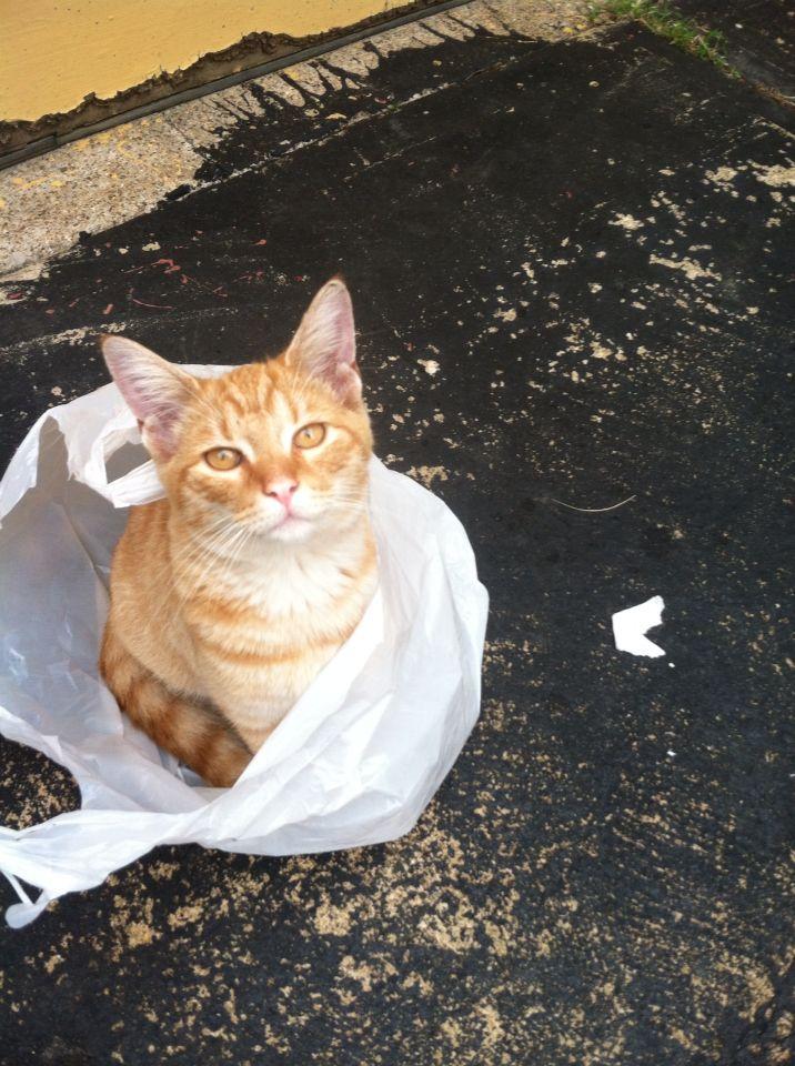 Orange cat!! Tootles!'