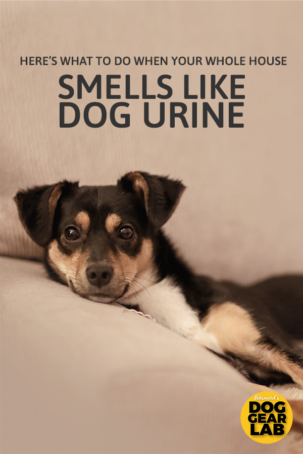 Here S What To Do When Your Whole House Smells Like Dog Urine Dog Urine Dog Smells Dogs