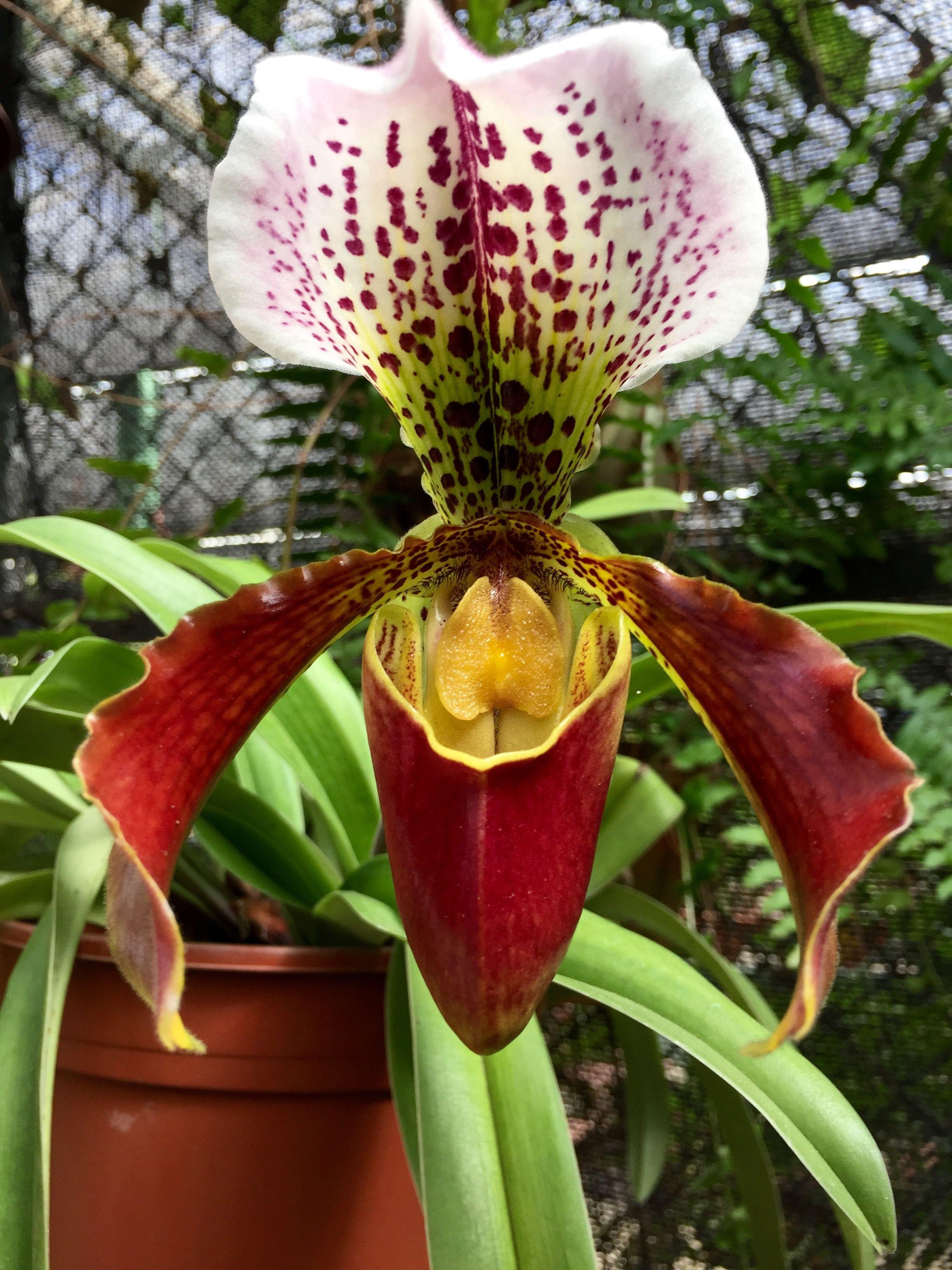 Orchids, Cacti, Planters, Plants, Lilies, Orchid