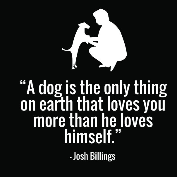 12 Cute Dog Quotes for Dog Lovers with Funny Images | Best ...