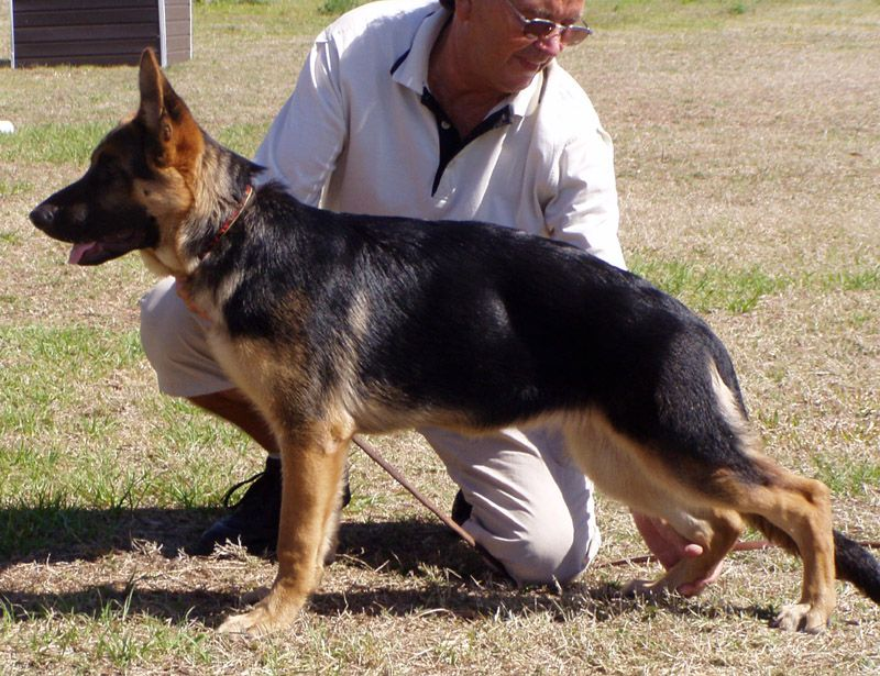 We are the only breeder in the State of Florida, where