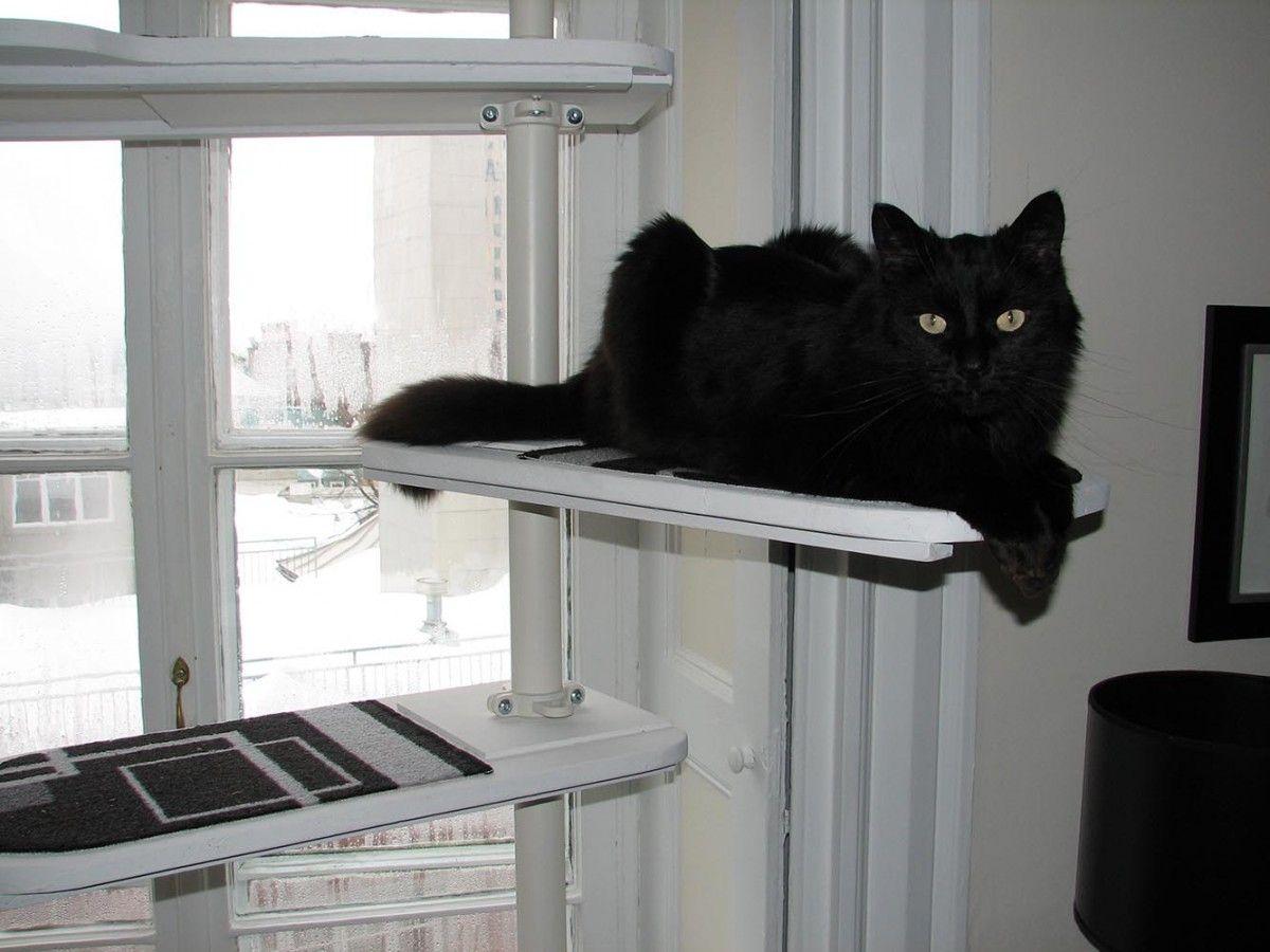 Un arbre à chat noir et blanc avec stolmen ikea chats et chats