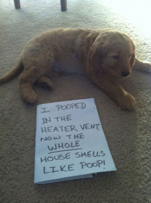 Guilty Dogs With Written Signs On What They Did Is Wrong Did - 26 funny photos of guilty dogs