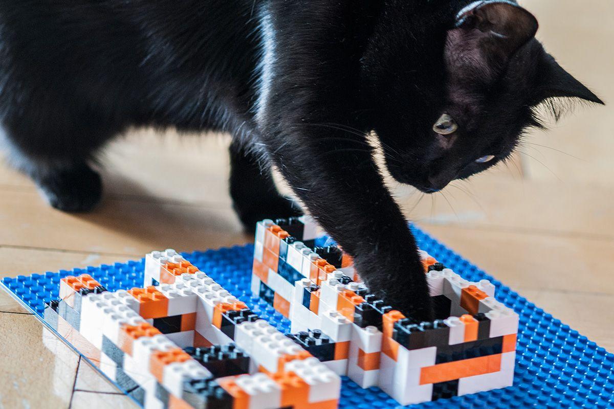 ein fummelbrett aus lego teilen mit etwas trockenfutter. Black Bedroom Furniture Sets. Home Design Ideas