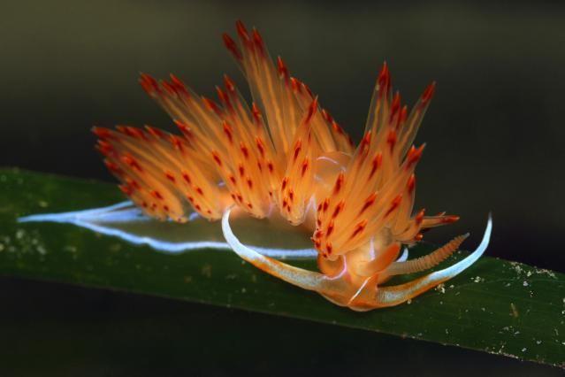 Mollusk Facts: Habitat, Behavior, Diet   Sea creatures ...