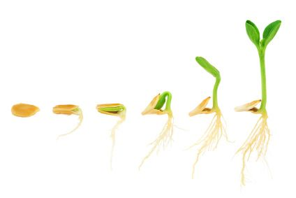 Grow your seeds with a Tower Garden Kit ~ at ~ Sanura Moon Lifestyle
