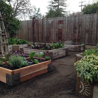 Winter Garden In Northern California Using The M Brace. Transitional Kitchen Island Ideas. Gender Reveal Ideas Silly String. Balcony Furnishing Ideas. Kitchen Design Bridgewater Nj. Ideas For Country Kitchen Cabinets. Zen Bedroom Ideas Pictures. Drawing On Vans Ideas. Gift Ideas Age 2