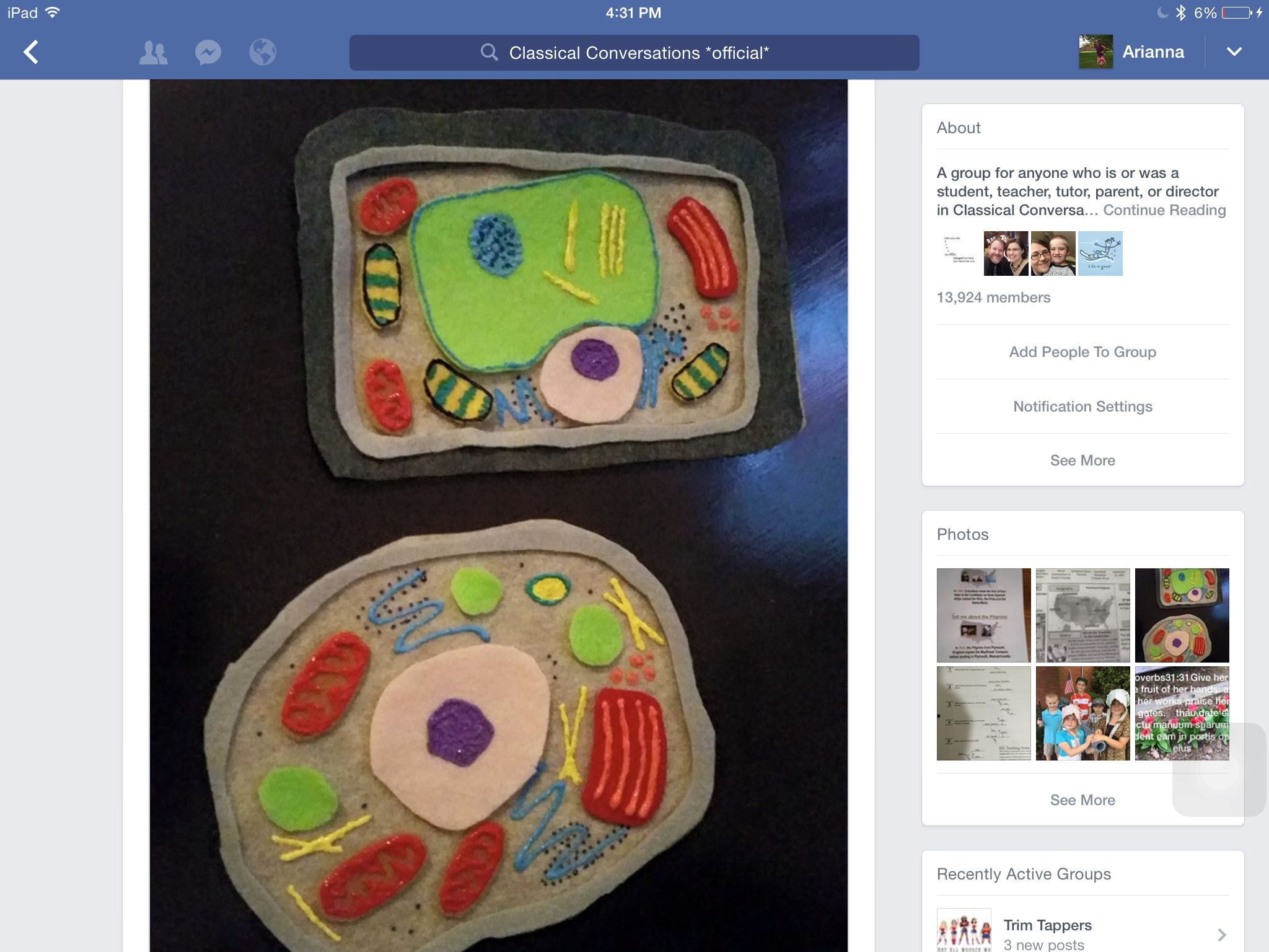 Felt Animal And Plant Cell For Cycle 1 Classical