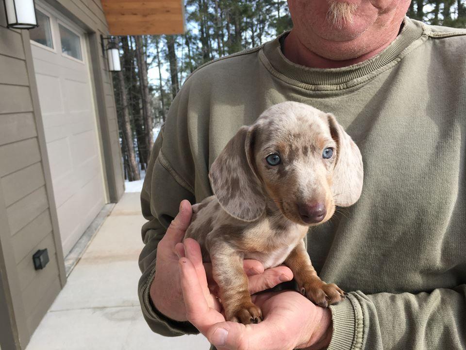 Https Www Facebook Com Home Php Weiner Dog Miniature Dachshunds Weenie Dogs