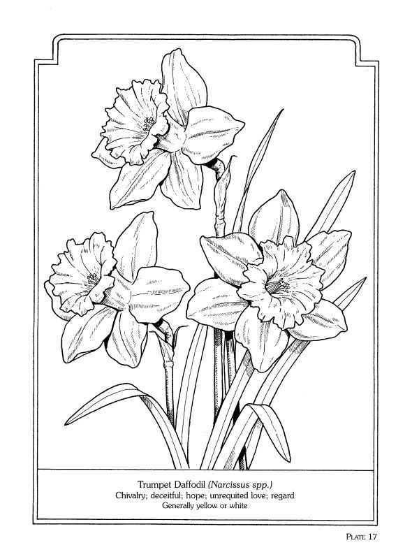 The Language of Flowers Coloring Book Dover Coloring Pinterest - copy free coloring pages of hibiscus flowers