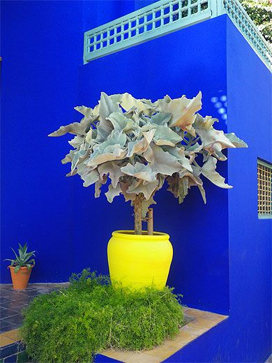 mariage de couleurs au jardin majorelle marrakech jardin majorelle maroc et le jardin. Black Bedroom Furniture Sets. Home Design Ideas