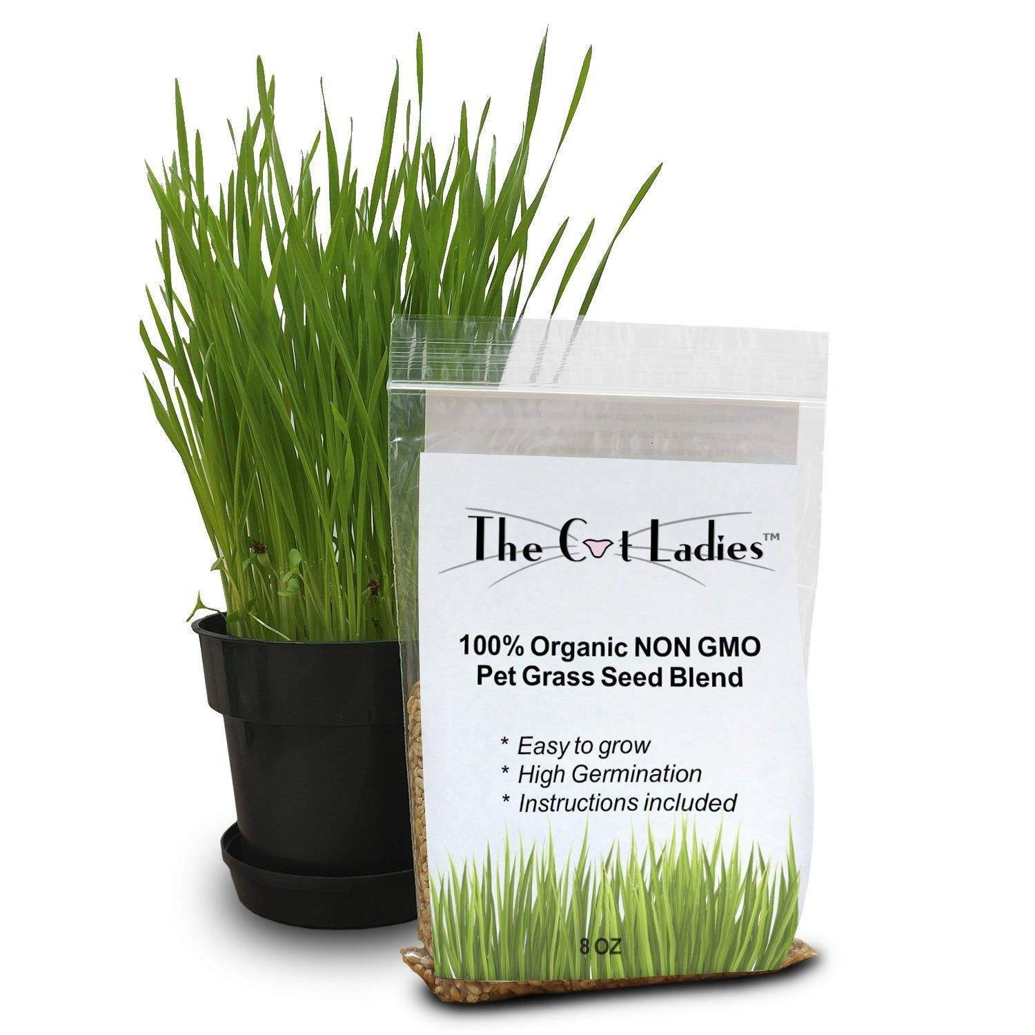 100 Organic Cat Grass Seed (NON GMO) *** Find out more