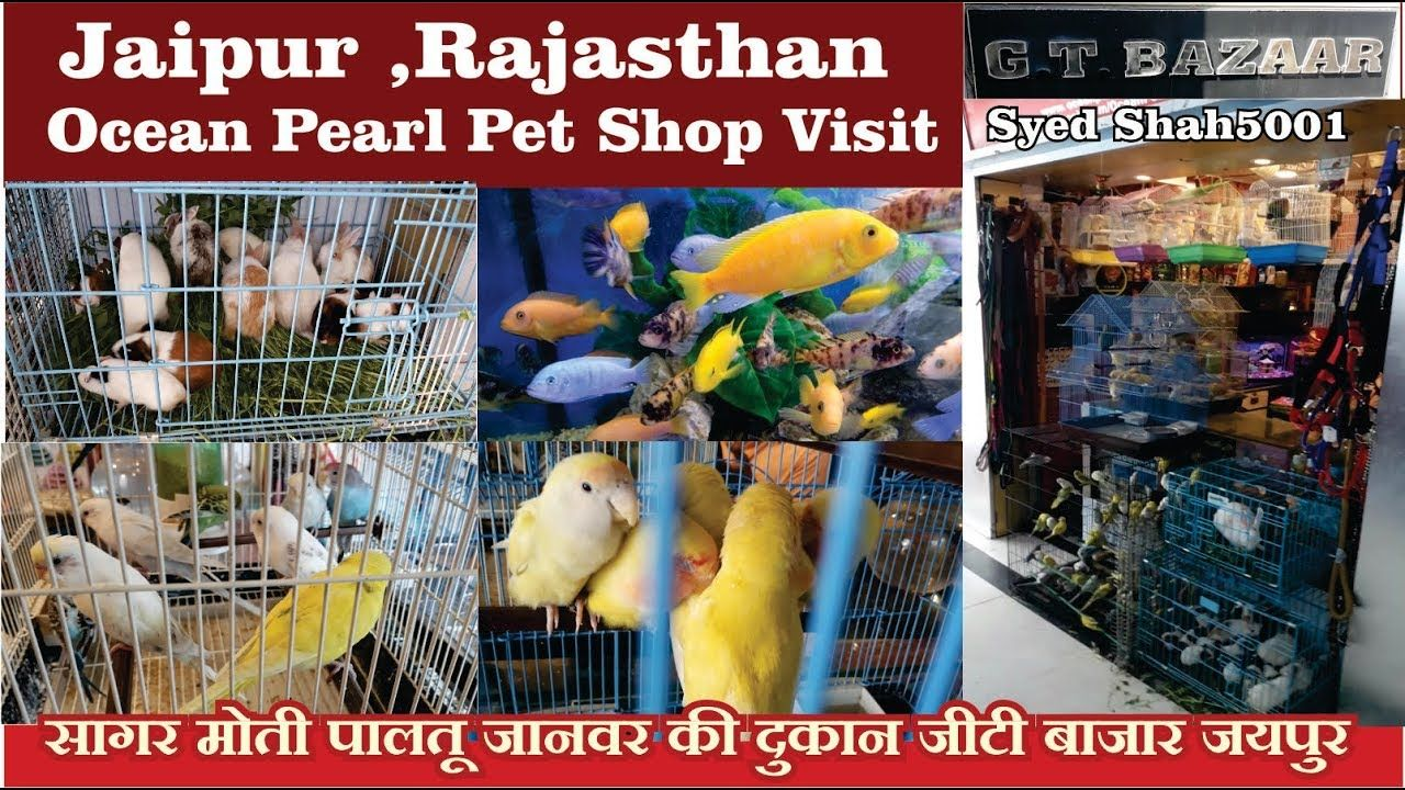 Ocean pearls pet shop Jaipur Aquarium Store visit जयपुर
