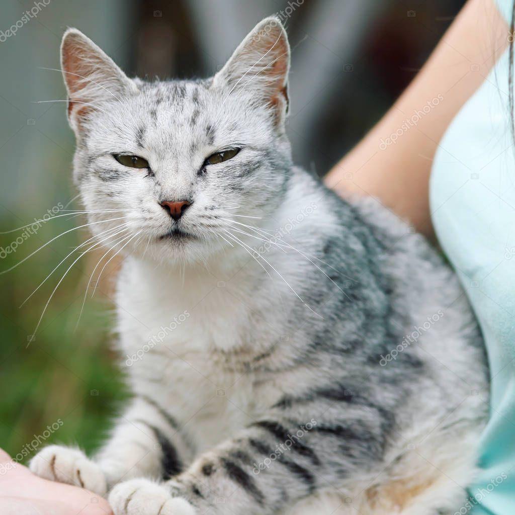 Cute Grey Tabby Cat Enjoying Time Female Hands Stock Photo