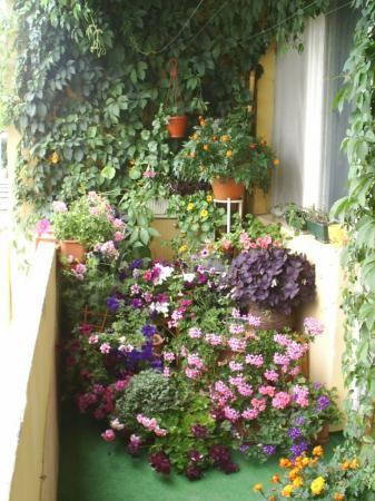 Image Detail For Create A Winter Garden On Your Balcony Garden