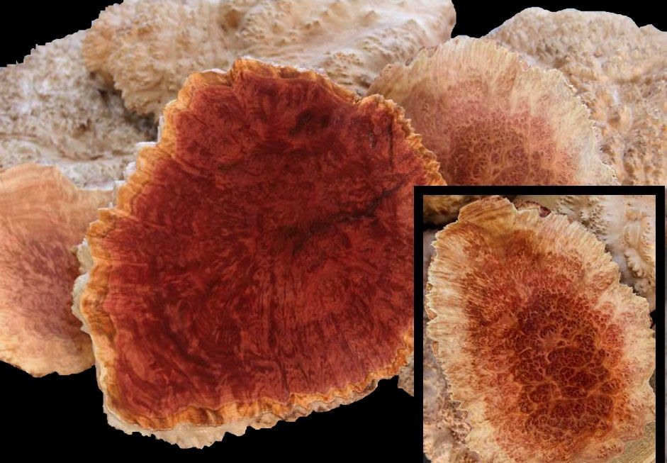 Exotic Wood Australian Goldfield Burl Red Mallee Burl Is