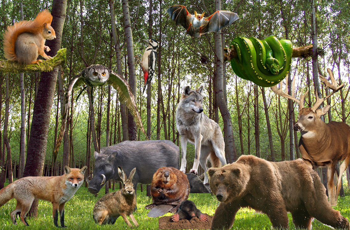 Theme forest animals group activities see and talk Juf