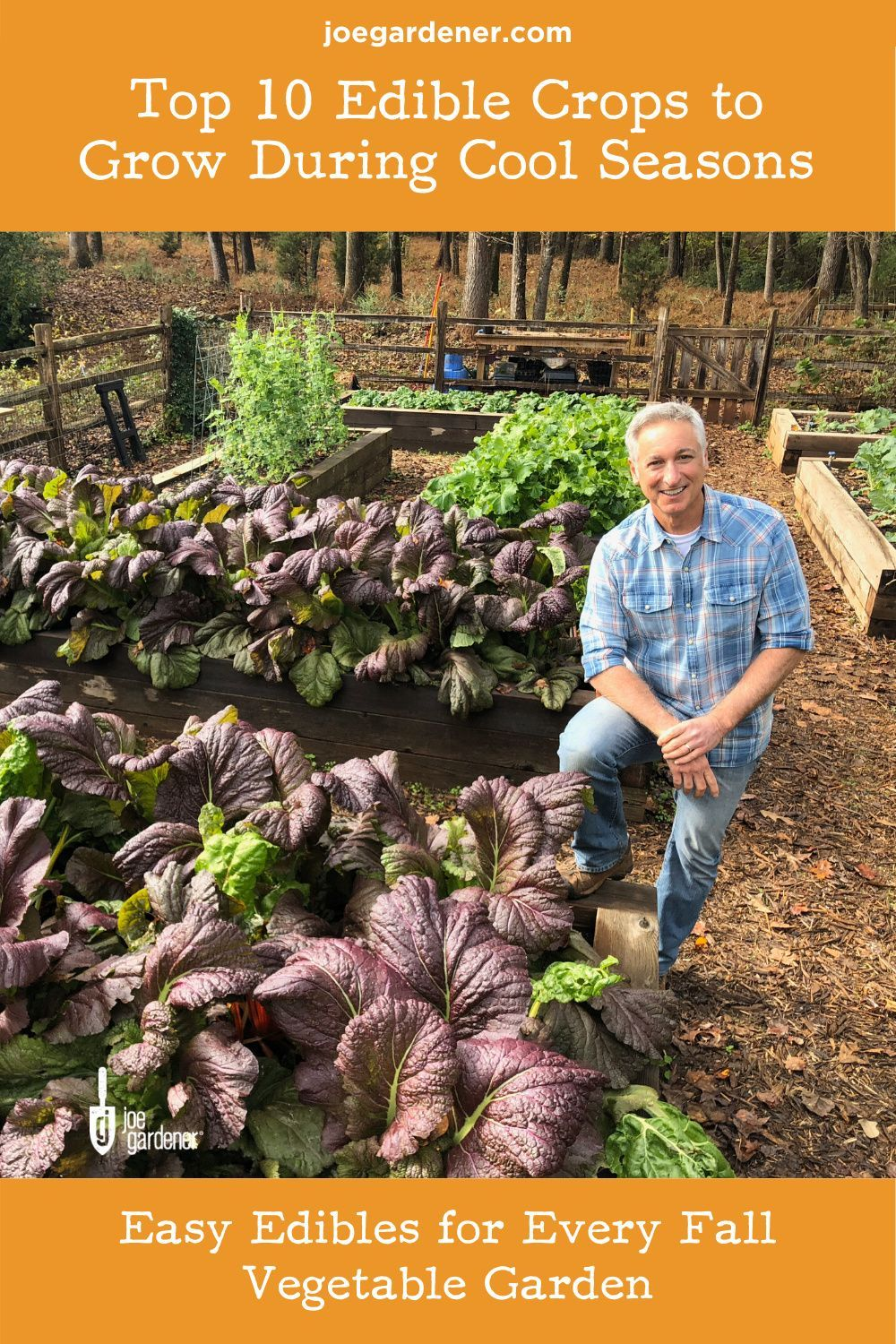 Many vegetables perform best when things cool down, and the cooler temperatures make gardening tasks more enjoyable. Here are 10 cool season crops to grow in a fall vegetable garden. | #fallvegetables #fallvegetablegarden #fallcrops #fallvegetables to plant