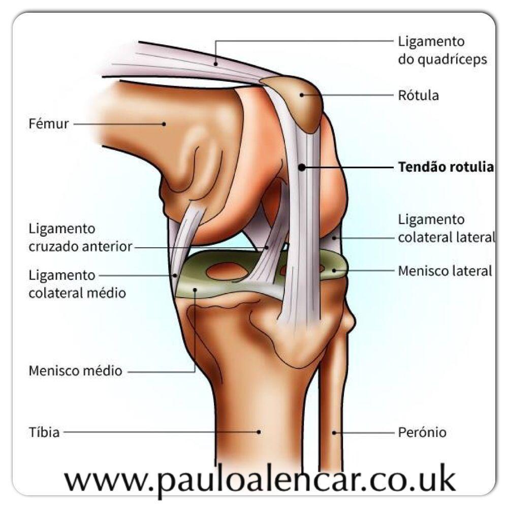 Excepcional Ligamento Colateral Lateral Adorno - Anatomía de Las ...